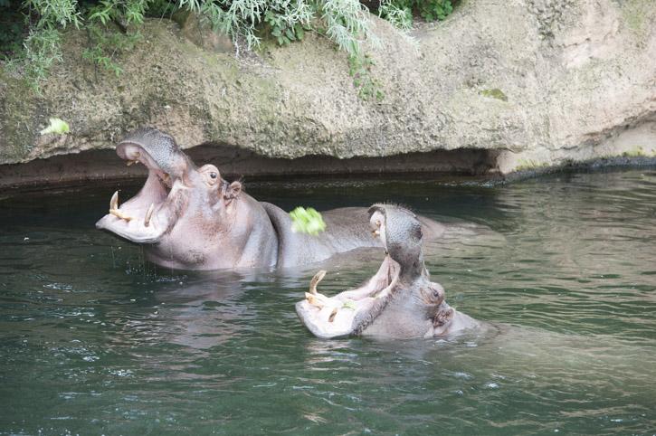 Ein Tag im Zoo Hannover