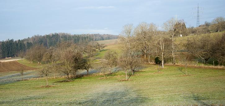 Obstbaumschnittkurs in Lörrach und Nordschwaben / Rheinfelden