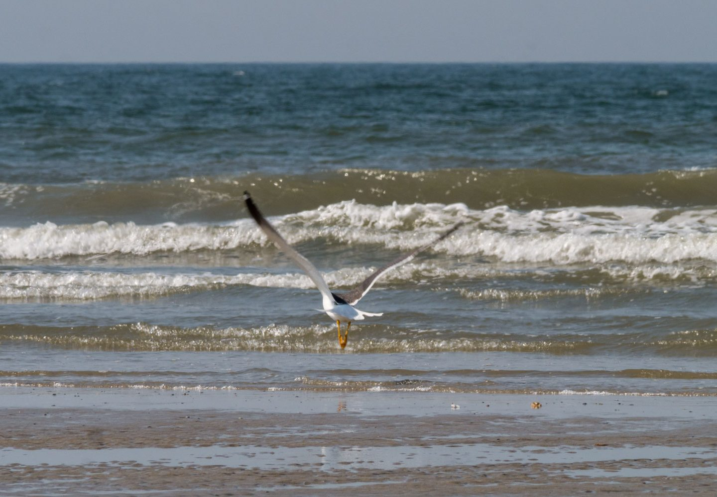 Ready for take off – Möwen am Juister Strand